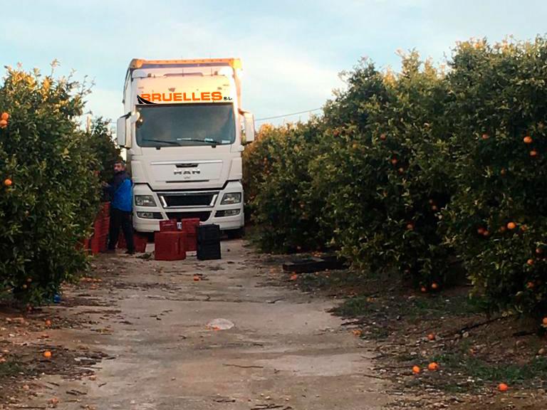 Camión de Bruelles dentro de un huerto de naranjos